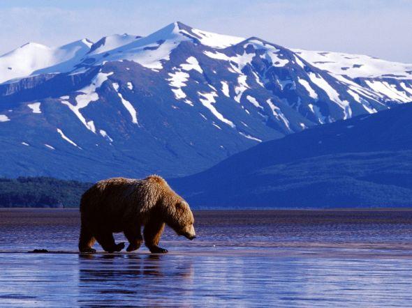 bearlandscape1.jpg