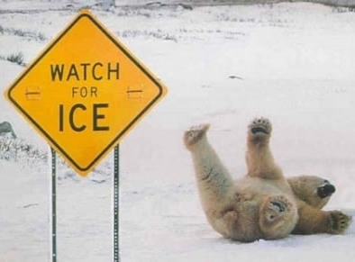 funny_polar_bear_pic_img121