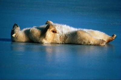 lazy-bear-01
